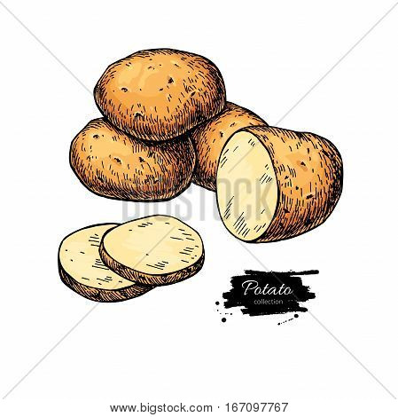 Potato vector drawing. Isolated hand drawn  potatoes heap and sliced piece. Vegetable artistic  style illustration. Detailed vegetarian food sketch. Farm market product.