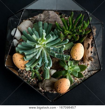 Small garden in florarium of succulent plants with easter eggs