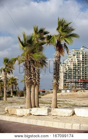 Palm trees and a hotel on the waterfront of Ashkelon in Israel