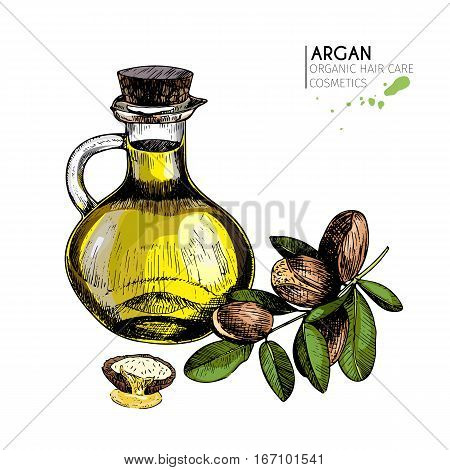 Vector set of hair care ingredients. Organic hand drawn colored elements. Argan nuts branch and oil bottle.cosmetic package shop store products spa salon wellness program procedure skin beauty.
