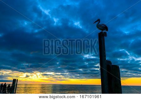 Pelican sitting on the pole near Glenelg Beach at sunset South Australia
