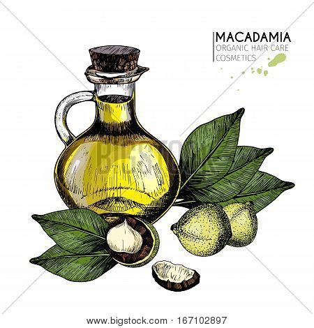 Vector set of hair care ingredients. Organic hand drawn colored elements. Macadamia nuts and oil bottle. cosmetic package shop store products spa salon wellness program procedure skin beauty
