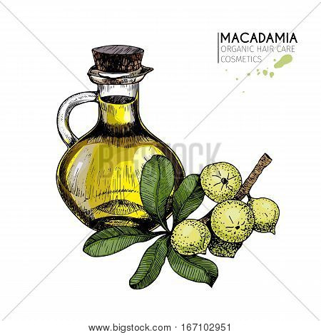 Vector set of hair care ingredients. Organic hand drawn colored elements. Macadamia branch and oil bottle. cosmetic package shop store products spa salon wellness program procedure skin beauty