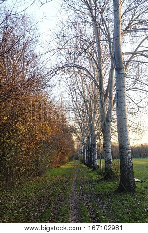 Milan (Lombardy Italy): the park known as Parco Nord at fall