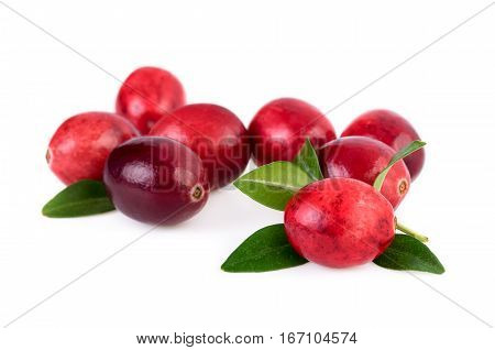 Cranberries isolated. Ripe cranberry with leaves isolated on white background