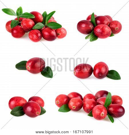 Isolated cranberries. Collection of fresh cranberry with leaf isolated on white