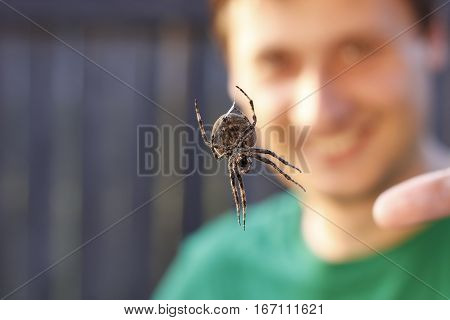 Huge spider hang on net with smiling blur man on background. Terrible insect and people. People afraid of spider