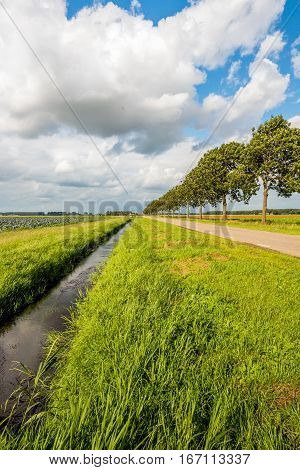 Converging lines in a colorful Dutch polder landscape on a cloudy day in the summer season.