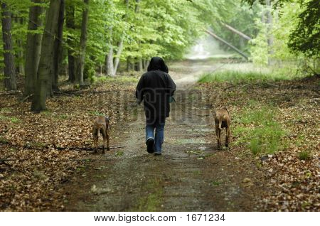 Dog walk through the wood after the rain poster