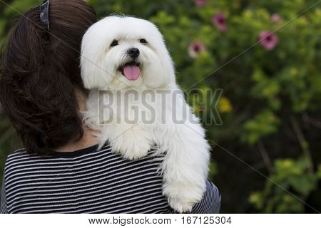 Brunette woman holding white maltese dog on her shoulder