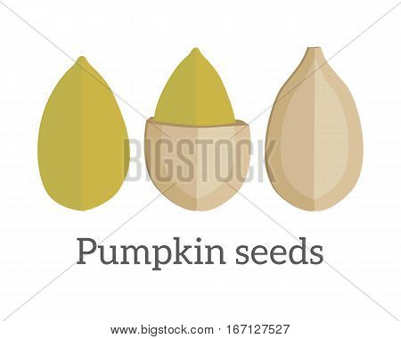 Pumpkin seeds vector in flat style design. Traditional classic snack from pile pumpkin. Diet and therapeutic product. Source of valuable fats, elements, vitamins and oil. Isolated on white background.