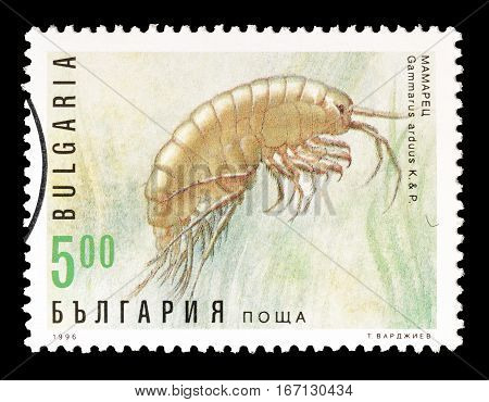 BULGARIA - CIRCA 1996 : Cancelled postage stamp printed by Bulgaria, that shows Shrimp.