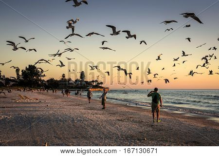 Siesta Key FL USA - November 18: Seagulls flock to the shoreline at Siesta Key beach in Sarasota Florida at sunset