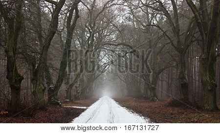 Snow-covered road in a gloomy forest. Dark tree.