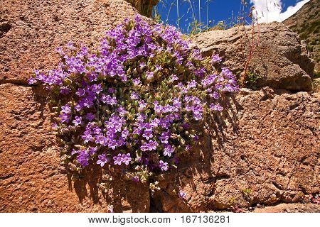 Wild flowers growing out of the Grecian temple at Delphi.