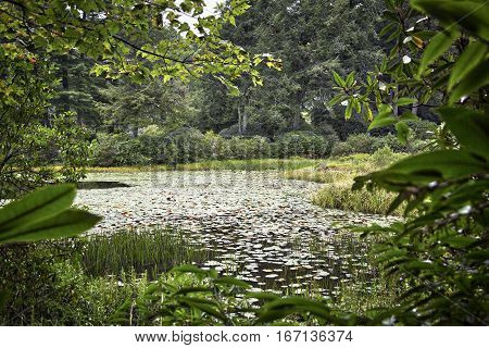 Lush foliage around a pond in the arboretum, Highlands, North Carolina