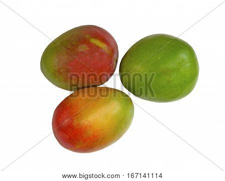 Three fresh juicy Mangoes on a white background