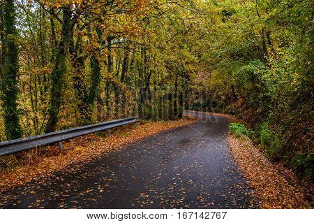 Wet asphalt road trough deep forest with many falling leaves and rust colors in November.