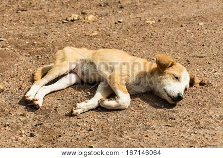 Sad lonesome stray dog is lying in the mud. poster