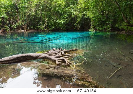 Unseen Emerald Pool locate in deef forest of national park Krabi in Thailand