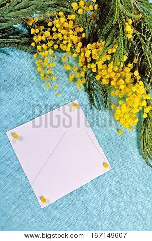 March background -mimosa flowers and white card for March greeting with on the blue tablecloth. March card