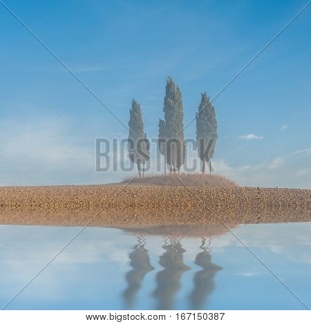 Cypress Trees Reflection In Water