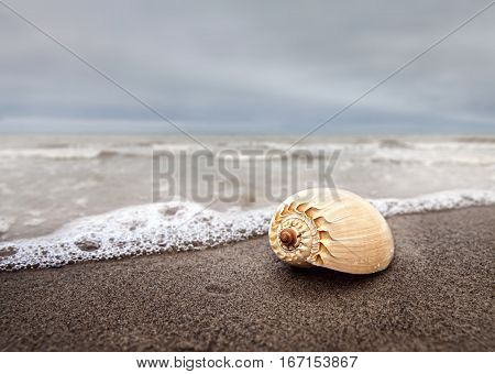 Sea Shell Lying On A Sandy Beach