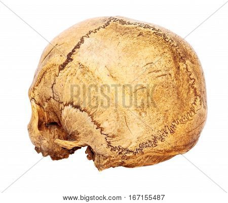 One old jawless Human Scull back view isolated on white