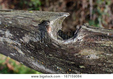Weathered fence rail at Lake Sammamish trail