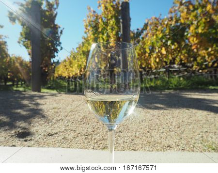 Glass of wine in popular Napa-Sonoma in California.
