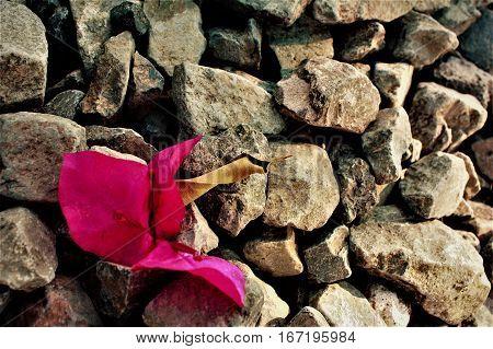 Flor de color rosa en piedras ubicada en tercio