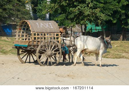 MINGUN, MYANMAR - DECEMBER 21, 2016: a Cart drawn by zebu and the words