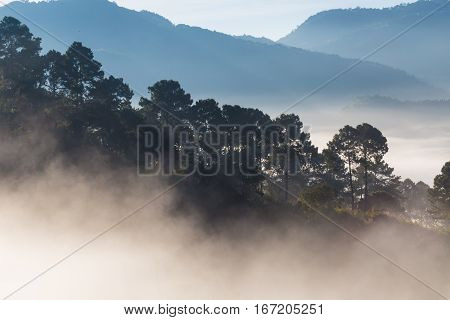 Mountain Sunrise Landscape With Fog In Morning