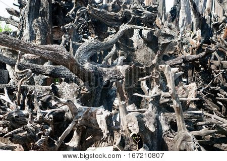 Close up background of gray dried plant roots.