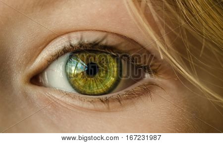 eye, green eye, close up, macro, girl, young, green, face, female, skin, attractive, human, portrait, person, glamour, vision, caucasian, beautiful eyes, eyelashes, model