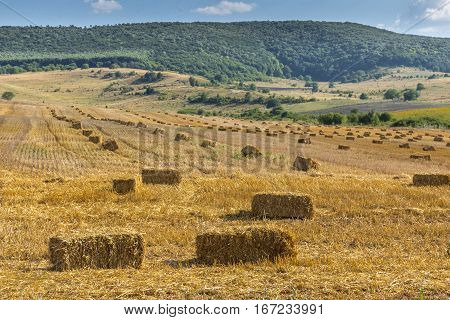 Agricultural landscape of farmland with hay bales