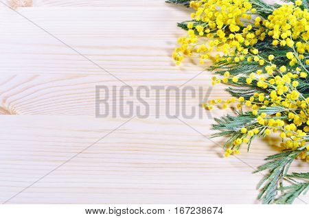 Mimosa spring flowers on the light wooden background. Selective focus at the spring mimosa flowers. Spring background with yellow mimosa flowers. Mimosa flowers on the light wooden surface