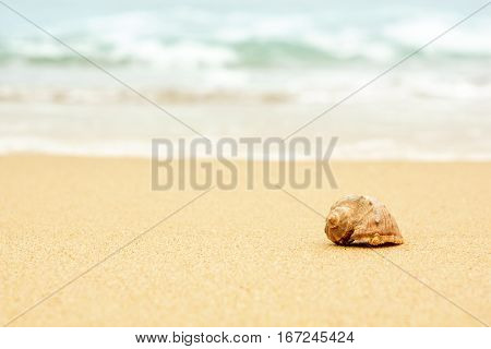 clam shell in the sand against the backdrop of the sea waves