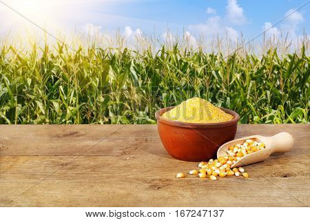 Dry uncooked corn groats in bowl on wooden table with corn field on background. Agriculture and harvest concept. Maize grains. Green field, blue sky, sun