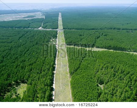 Forest way (view from above).