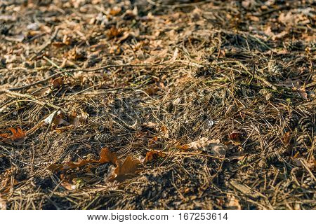 Colorful piece of a forest floor in autumnal colors from close. Pine cones pine needles oak leaves and fallen twigs in a full screen image in vivid colors.