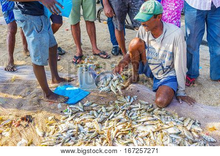 The Fresh Fish