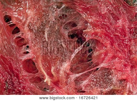 Red abstract flesh.