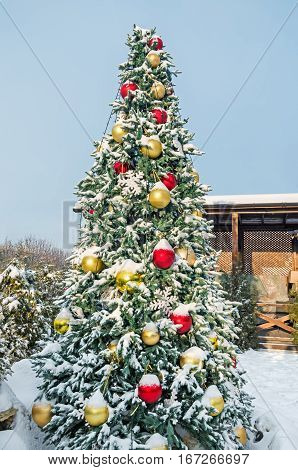 Beautiful snow covered Christmas spruce in courtyard in the soft rays of sunset