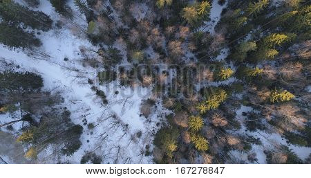camera looking straight down over winter fir forest in sunset, 4k drone photo
