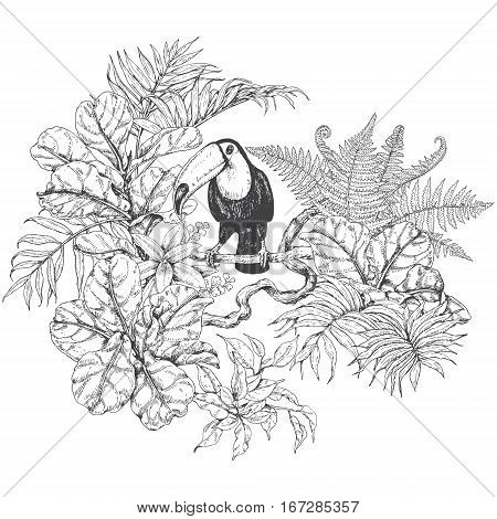 Hand drawn branches and leaves of tropical plants. Monochrome floral bunch with bird. Toucan sitting on liana branch. Black and white coloring page for adult. Vector sketch.