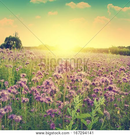 Flower field during sunset in vintage style.