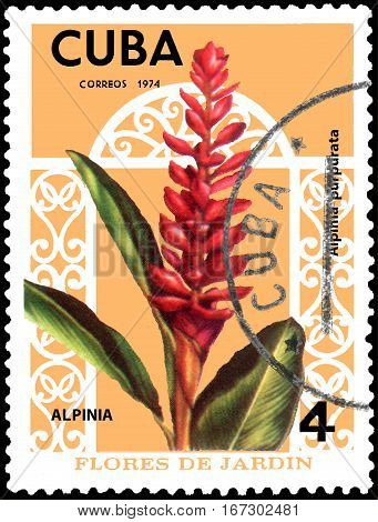 CUBA - CIRCA 1974: Postage stamp printed in Cuba shows the flower Alpinia purpurata, series garden flowers