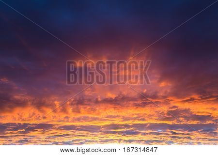 fantastic sunset - golden clouds illuminated by the beam of the setting sun against dark purple sky - beautiful natural background phenomenon of nature