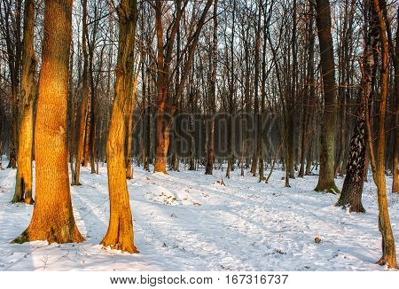 winter sunset in the forest on cold day